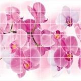 Панель стеновая ПВХ  Эконом мозаика орхидея розея 0,955х0,48м (10)