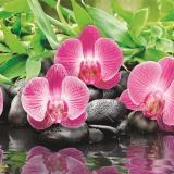 Фартук ПВХ Орхидея 600*3000*1,5мм (5)