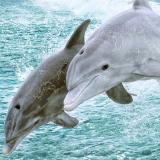 Панель ПВХ Unique  фигурная Голубая лагуна Три дельфина 2700*250*8мм (12)