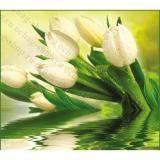 Белые тюльпаны Фотообои VIP  12л 294*260см (Тула)