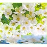 Весна Фотообои VIP 12л 294*260см (Тула)