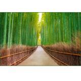 Бамбуковая роща Фотообои  16л 392х260 см (Тула)