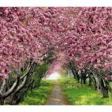 Аллея в саду Фотообои VIP 12л 294х260см (Тула)