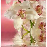 Ф Розовая орхидея Фотообои на флиз. основе 300х270 см (Тула)